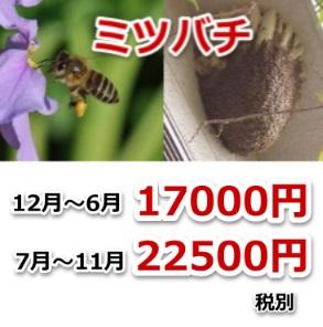 ミツバチ駆除料金ジェイ・ワークス画像